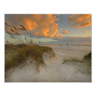 Beautiful Sand Dunes in Daytona Beach, FL Photo