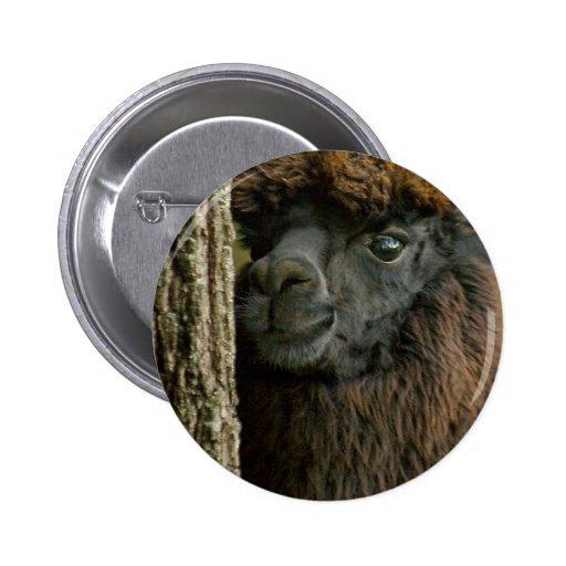 Beautiful Savannah The Suri Alpaca 2 Pinback Buttons