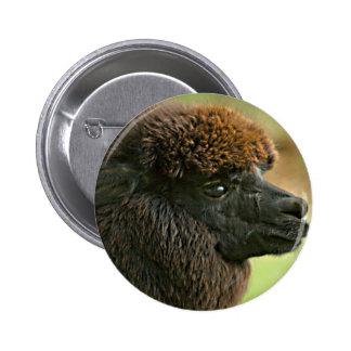 Beautiful Savannah The Suri Alpaca Pinback Buttons