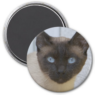 Beautiful Seal Point Siamese Cat 3 Inch Round Magnet