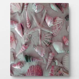 Beautiful Seashells Plaque