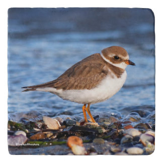 Beautiful Semipalmated Plover at the Beach Trivet
