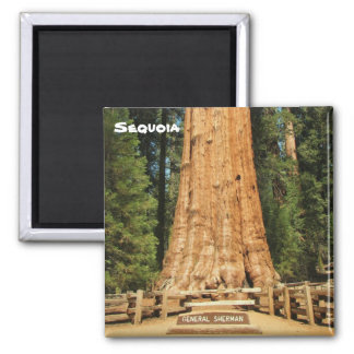 Beautiful Sequoia Magnet! Magnet