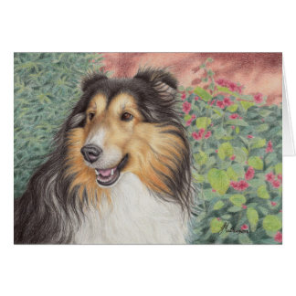 Beautiful Sheltie Card