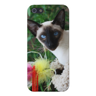 Beautiful Siamese Cat Playing With Toy iPhone 5/5S Cases