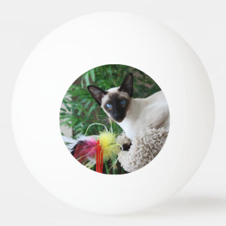 Beautiful Siamese Cat Playing With Toy Ping Pong Ball