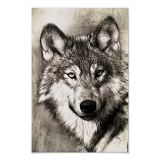 Beautiful Sketch of Wolf's Face Poster