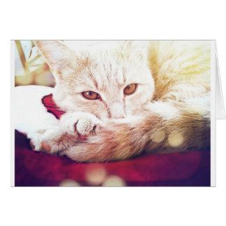 Beautiful sleepy cat greeting card