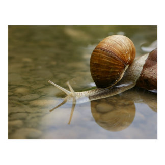Beautiful Snail and Reflection in Water Postcard