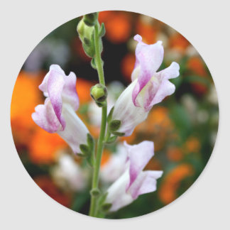 Beautiful Snapdragon Flower Design Round Sticker