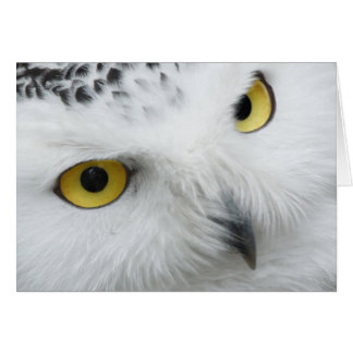 Beautiful Snowy Owl Eyes Happy Birthday Card