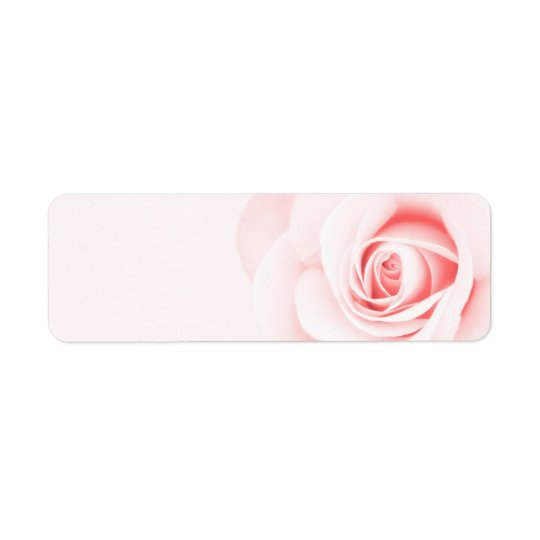 Beautiful soft pale pink rose flower floral