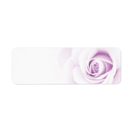 Beautiful soft pale purple rose flower floral