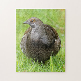 Beautiful Sooty Grouse in the Grass Jigsaw Puzzle