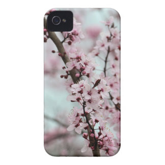 Beautiful Spring Cherry Blossom iPhone 4 Cases