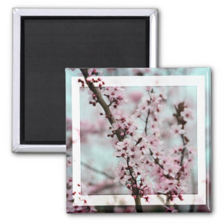 Beautiful Spring Cherry Blossom Square Magnet