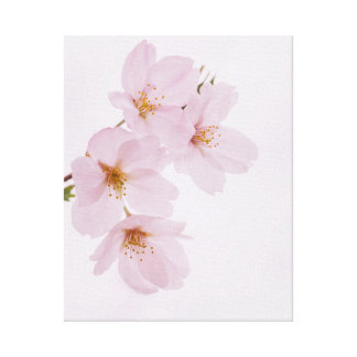 Beautiful spring cherry blossoms in Tokyo Canvas Print