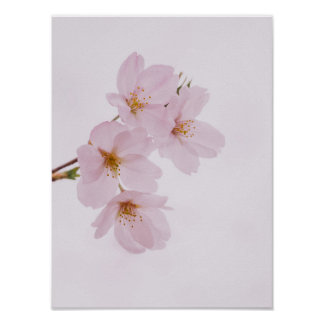 Beautiful spring cherry blossoms in Tokyo Poster
