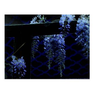 Beautiful Strange Blue Lavender Wisteria Night Postcard