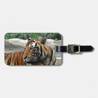 Beautiful Sumatran tiger Luggage Tag