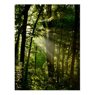Beautiful Sunbeams in the Morning Summer Forest Postcard