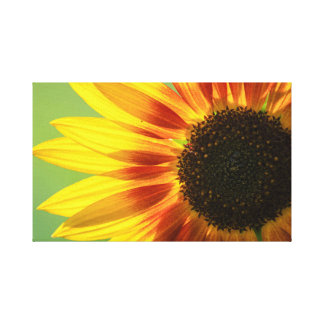 Beautiful sunflower canvas print