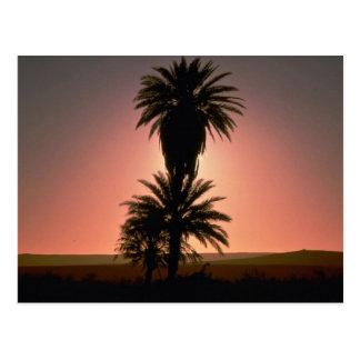 Beautiful Sunset: Sahara Desert, Algeria Postcard