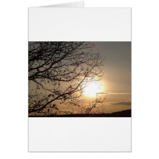 Beautiful sunset with branchs card