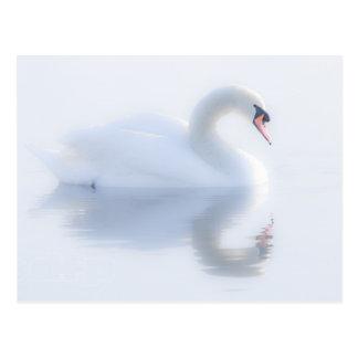 Beautiful Swan Postcard
