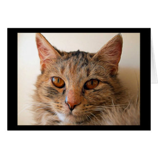 Beautiful Tabby Cat Card