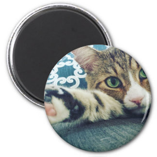Beautiful Tabby Cat with Green Eyes 2 Inch Round Magnet