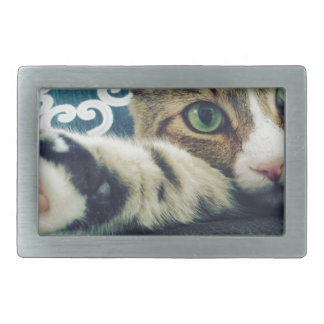 Beautiful Tabby Cat with Green Eyes Belt Buckles