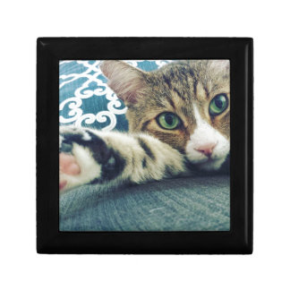 Beautiful Tabby Cat with Green Eyes Gift Box