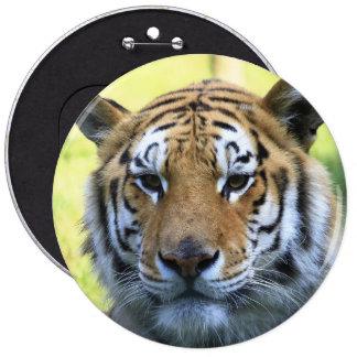 Beautiful tiger portrait 6 inch round button
