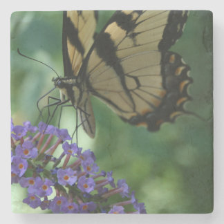Beautiful Tiger Swallowtail Butterfly on Flower Stone Coaster