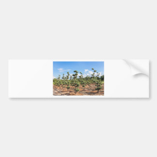 Beautiful topiary shapes in conifers bumper sticker