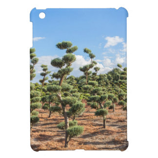 Beautiful topiary shapes in conifers cover for the iPad mini