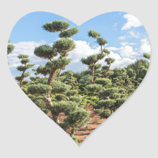 Beautiful topiary shapes in conifers heart sticker