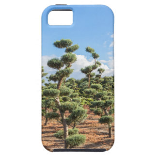 Beautiful topiary shapes in conifers iPhone 5 case