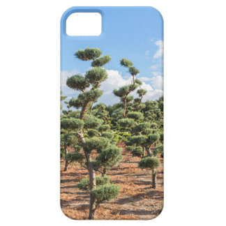 Beautiful topiary shapes in conifers iPhone 5 cover