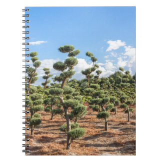 Beautiful topiary shapes in conifers notebook