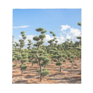 Beautiful topiary shapes in conifers notepad