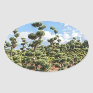 Beautiful topiary shapes in conifers oval sticker