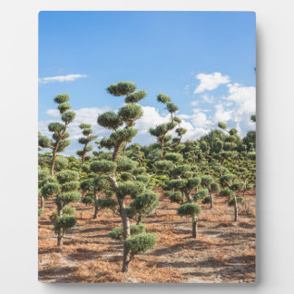 Beautiful topiary shapes in conifers plaque
