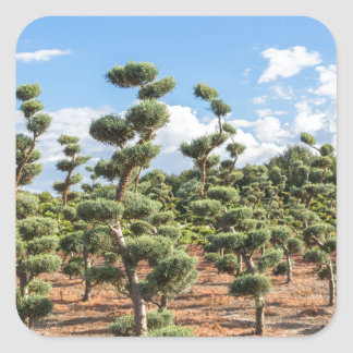 Beautiful topiary shapes in conifers square sticker