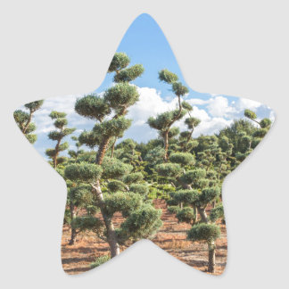 Beautiful topiary shapes in conifers star sticker