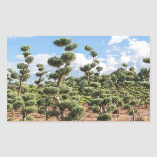 Beautiful topiary shapes in conifers sticker