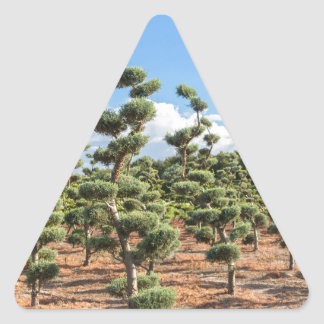Beautiful topiary shapes in conifers triangle sticker