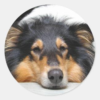 Beautiful tri color Collie dog sticker, gift idea Classic Round Sticker