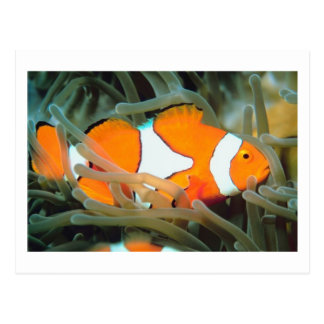 Beautiful Tropic Fish Postcard
